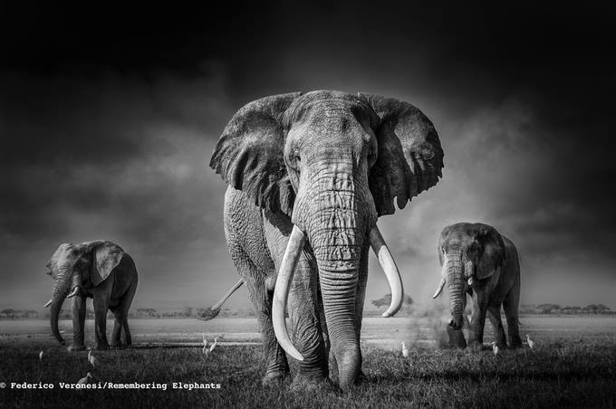 Remembering Elephants Margot Raggett Born Free