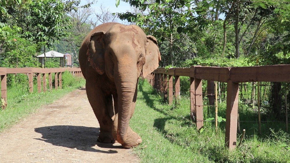 GreenWorldTV This Is The Extreme Torture Elephants Are Put Through Just So That People Can Ride Them For Fun