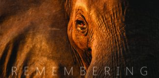 Remembering Elephants Book by Margot Raggett