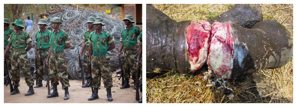National Park Rescue - Malawi. Founded by Mark Hiley to save poached animals