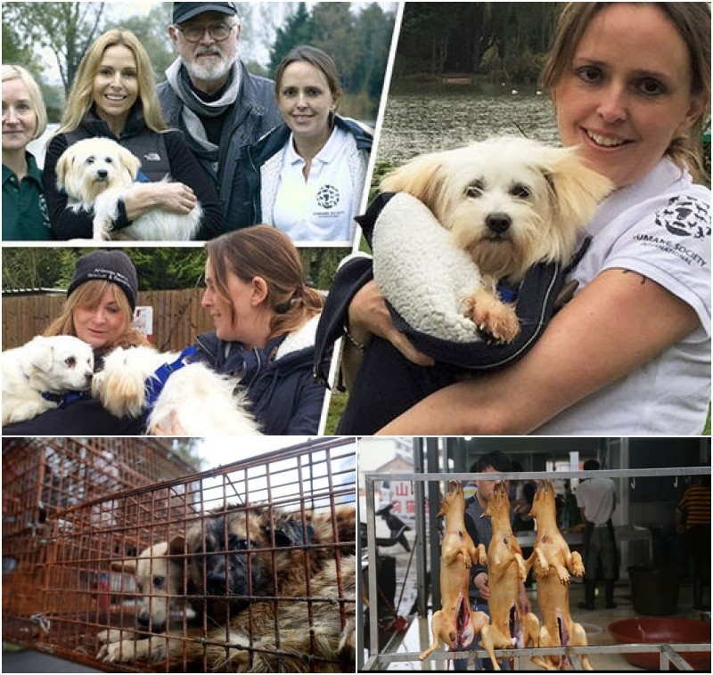 Humane Society International rescue 4 dogs from Yulin Dog Meat Trade