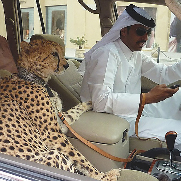 United Arab Emirates bans wild animals as pets