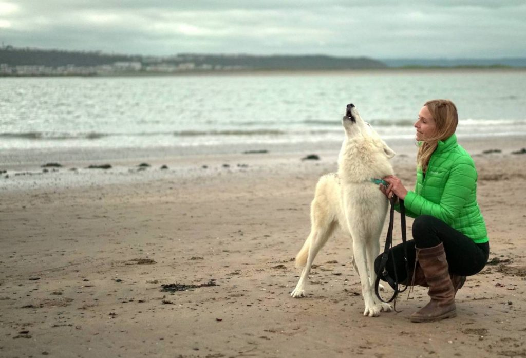 Anneka Svenska Wolfdog Rescue UK