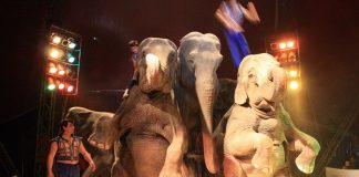 Ireland will ban circus animals
