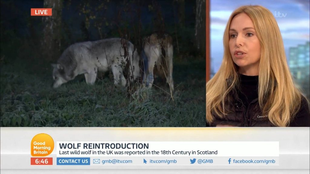 Wolf reinroduction Good Morning TV Anneka Svenska
