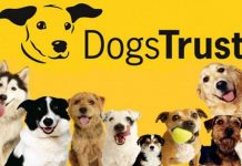 Hope Project Carol Concert Dogs Trust Green