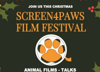 Screen4Paws