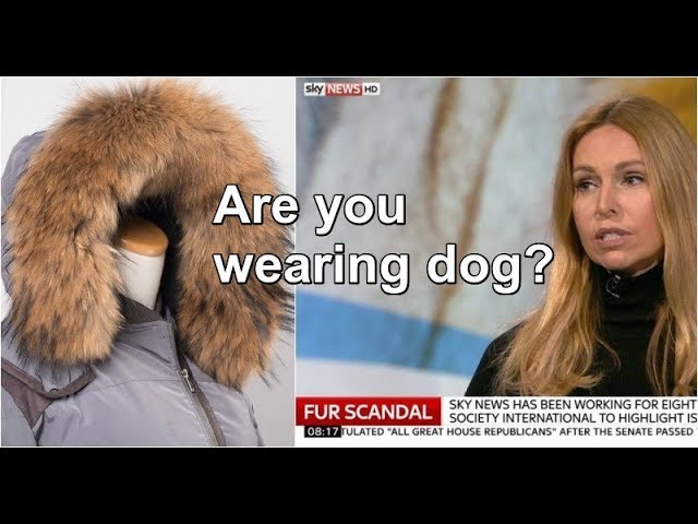 faf06a4086d REAL FUR MARKETED AS FAUX SCANDAL - Green World TV