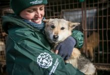 170 dogs saved by Humane Society International from the Korean dog meat trade