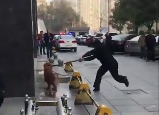 Golden Retriever killed by Chinese policeman