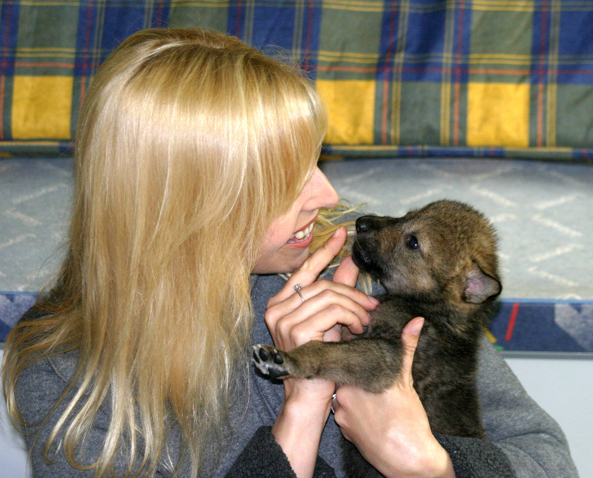 Anneka Svenska bottle fed Toraq at The Anglian Wolf Society when he was a few weeks old