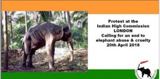 Protest against the cruelty to India's temple elephants