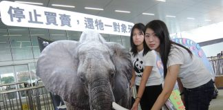 Hong Kong bans ivory sales in landmark vote