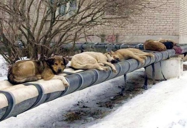 Russia plans to slaughter hundreds of stray dogs before the World Cup